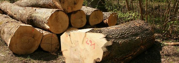 Holzhandel