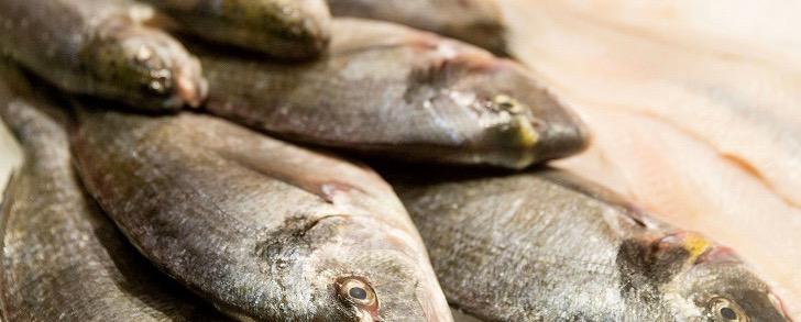 So wird Fisch richtig lecker!